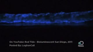 Earth: Bioluminescent Waves Explained