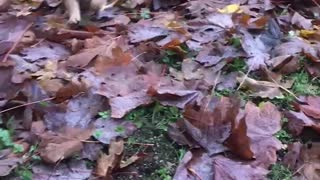 Cute puppy playing in leafs