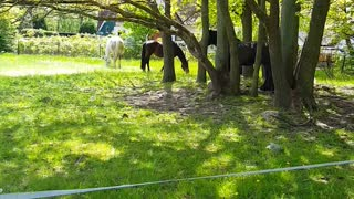 Beautiful horses graze in the meadow