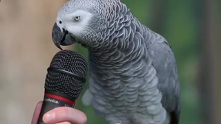 parrot talks nicely with his sweet voice.