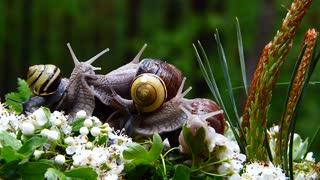 a magnificent set of snails