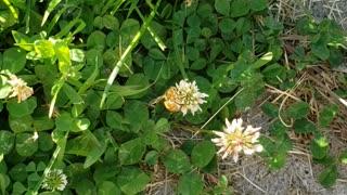 Honey bee on flowers