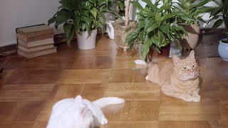 just 3 cats