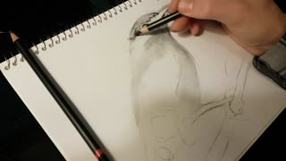 Bird Sketch Time Lapse