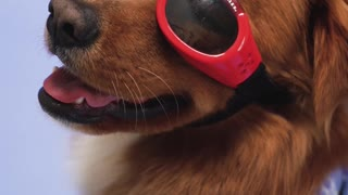 Funny cat and dog videos my sweet dog my love