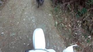 Wild animals attack cars part 1