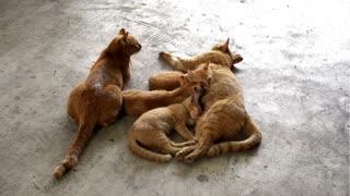 Beautiful cat family