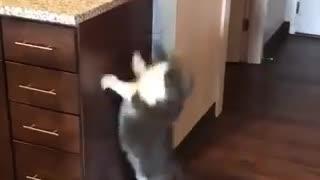 cat tries to jump high lol