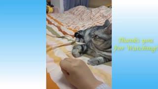 A smart cat Funny Animals