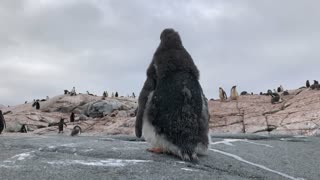 Penguin Gives Camera an Unexpected Surprise