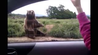 Bear saying goodbye