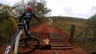 ox attacks cyclist