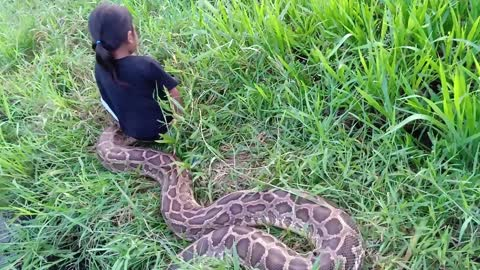 Indonesian toddler loves to play with giant python