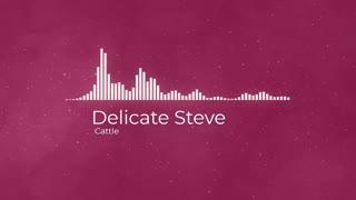 Delicate Steve Cattle
