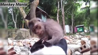 Funniest monkey.... with cat