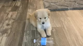 """Puppy is totally confused when """"confronted"""" by plastic bottle"""