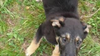 Playful dog outside !