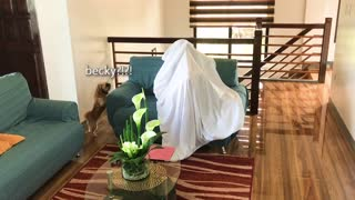 Owner plays epic game of hide-and-seek with her doggy