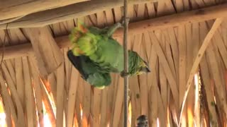 Cute Parrot On Rope