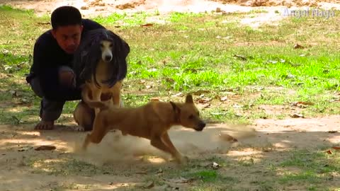 Fake Hair Dog Prank Dog make Funny
