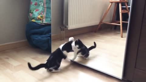 Funny Cat And mirror Video Funny video What's App Videos,30 Seconds Status Video