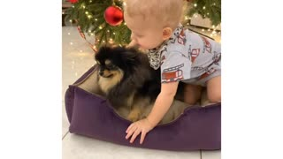 baby playing beside the christmas tree with his puppy.