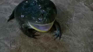 Grumpy Frog Makes Strange Sound