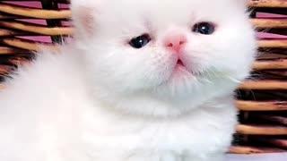 Adorable Milk Drunk Kittens