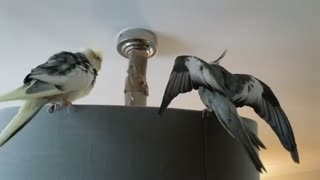 """Pepper, """"mum pls help, I don't know what he's doing"""""""