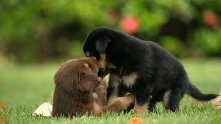 Puppy dog friendship