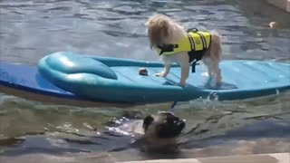 Hero Dog rescue his friend from drowning in swimming pool