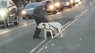 Stubborn dog refuses to cross busy street