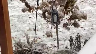 Bobcat caught Squirrel