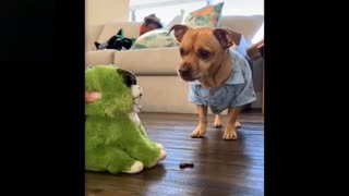 Cute Animals Funny Video Complications