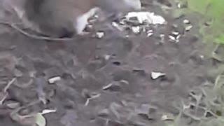 Cute squirrels