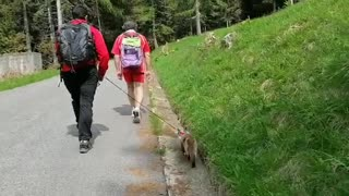 Cat adventure, summer adventure with family