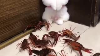 A poppy under attack by a bunch of lobsters