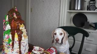 Cake Decorating 101 with Funny Dog Maymo Yummy Cake Recipe Dog Chef