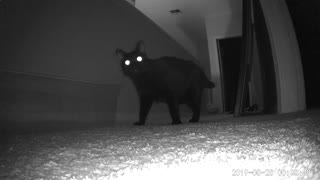 Cats Running with Glowing Eyes