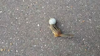 Chipmunk Helped with its Stuck Head