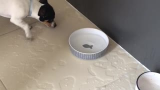 Splashing Puppy Makes Huge Mess Trying To Catch Fish Decoration