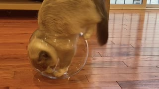 Cat wants to be a Fish