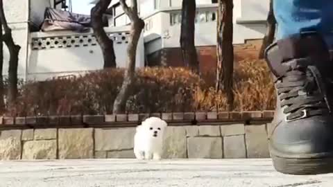 Funny puppy videos   Funny dogs videos