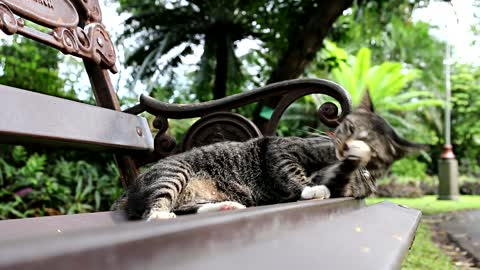 The cat lies resting in a chair