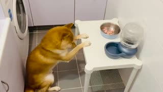 Spiritual dog bows his head in prayer before meal