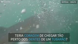 A mordida de um tubarão-branco como você nunca viu