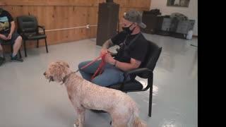 Separation anxiety dog training!