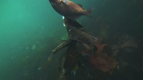 Spearfishing Carmel 2021