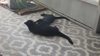 Kitties 3