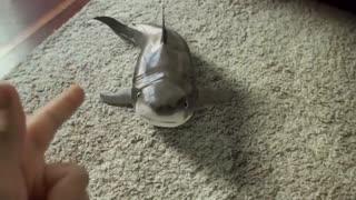 Cutest baby shark, happy shark